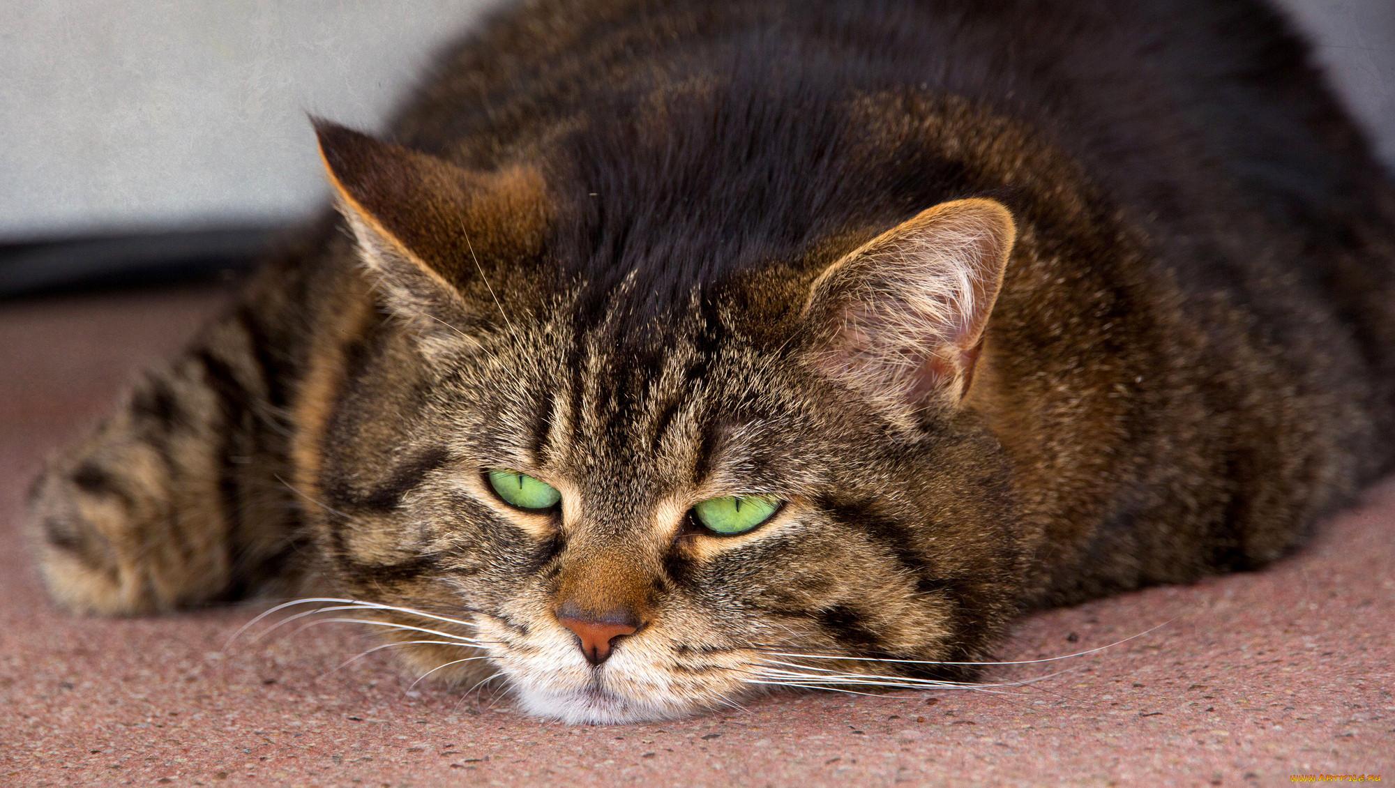 Картинки кот котэ